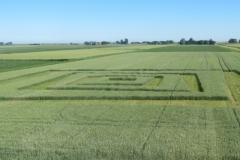 Kunst in het graan 2, Henk Rusman